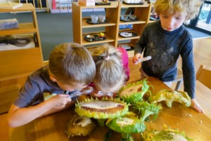 young-botanists