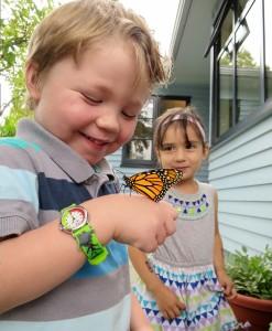 butterfly-friends