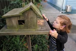 feeding-the-birds