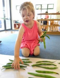 harvest-time-beans-