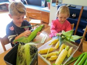 preparing-the-corn